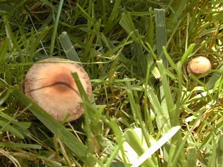 Small unknown mushrooms