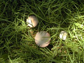Unknown small mushrooms