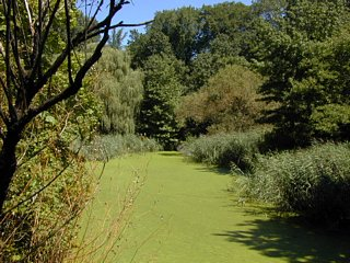 View of lake extension covered with duckweed