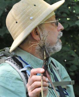 Wildman holding burdock root