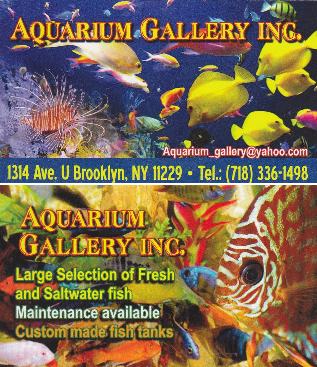 Fish aquarium business - Aquarium Gallery 1314 Avenue U 11229 Bet 13th And 14th Sts 718 336 1498 Business Card Scan